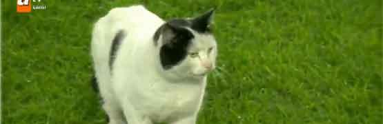 fener maçına kedi girdi